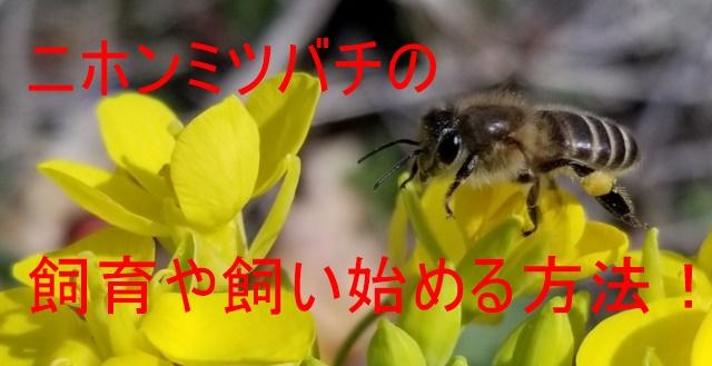ニホンミツバチの飼育や飼い始める方法!