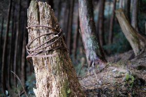 ワイヤーの巻かれた木
