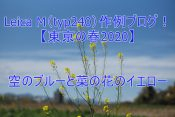 Leica M(typ240)作例ブログ!【東京の春2020】空のブルーと菜の花のイエロー